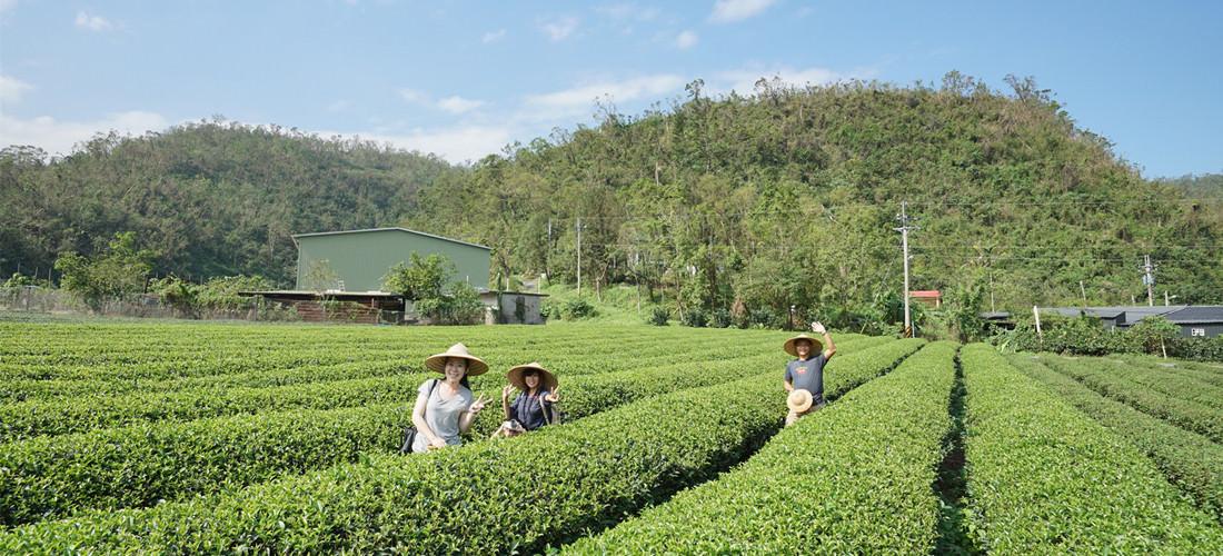 宜蘭 ♥ 正福茶園 ♥ 採茶體驗
