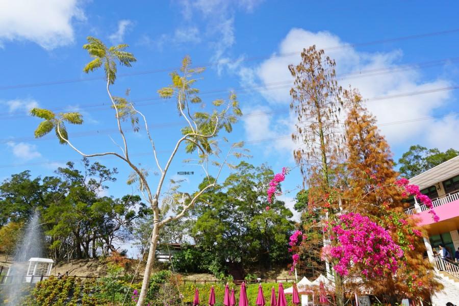 新竹芎林景點美食 心鮮森林莊園餐廳  野餐 教堂 約會 大草地 小動物 義式料理 玩沙 親子同遊 老少咸宜 聚餐聚會 婚宴