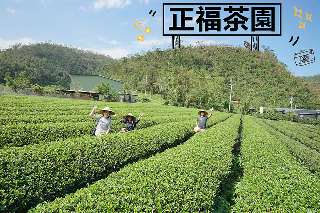 宜蘭冬山景點 | 正福茶園 採茶體驗 台灣在地生產 生態永續經營茶園 通過有機及履歷嚴格檢驗
