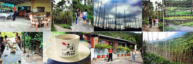 西拉雅農特產體驗之旅 ♥ 東山高峰咖啡園 ♥ 天池