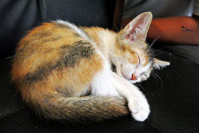捷運國父紀念館站美食 | Toast Chat 貓咪餐廳 與可愛的貓兒一起享用美食吧 !!!